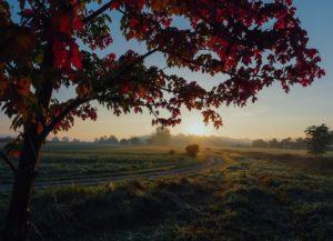 Maple Tree, The Best Medicine, Lynn Chantale